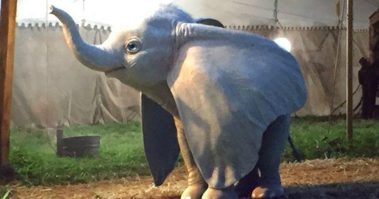 Dumbo. Beeld Disney
