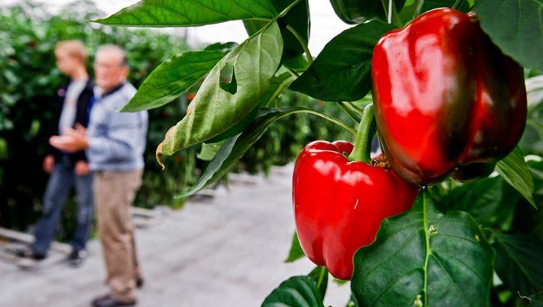 Iedere week kunnen verse groenten en fruit worden opgehaald bij de VU Beeld anp