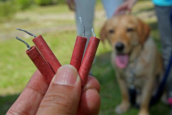 Veel huisdieren zijn doodsbang voor vuurwerk. Sommigen schrikken zo dat ze er zelfs vandoor gaan.
