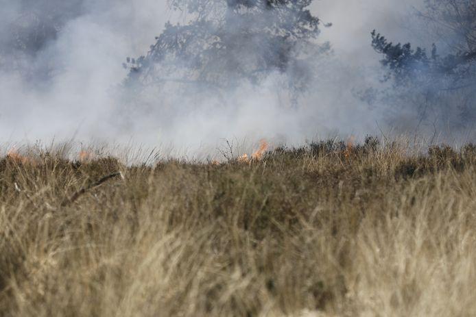 Brand in natuurgebied Schijf.