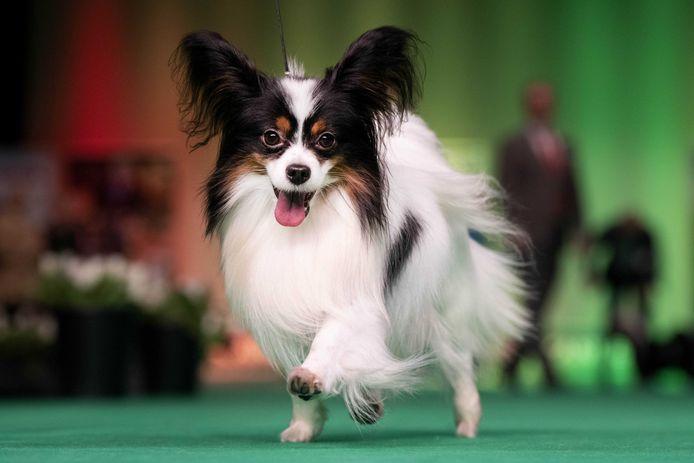 De hondenbelasting is achterhaald en moet worden afgeschaft, vinden 60 .000 burgers die een burgerinitiatief ondertekenden.