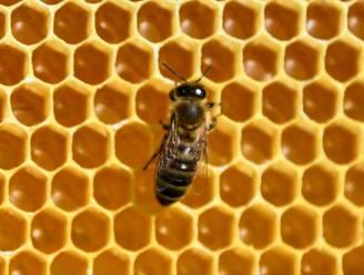 Europese Unie verbiedt pesticide die bijen doodt, België vraagt uitzondering