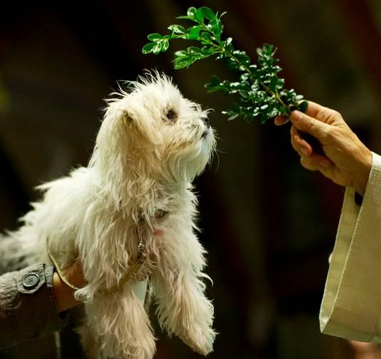 Een hond wordt gezegend door pastor Lidwien Meijer in de Heilige Hart Kerk in Schiedam. Over de hele wereld houden katholieke kerken jaarlijks op 4 oktober vieringen waarin dieren worden geëerd.