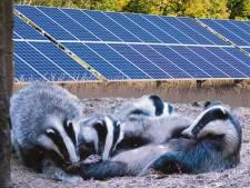 Das bepaalt of zonnepark er wel of niet mag komen