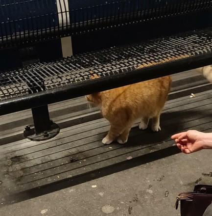 De rode kat die slachtoffer werd van mishandeling op het station