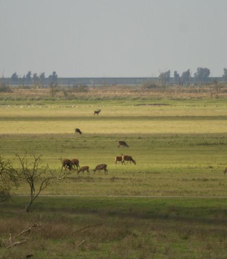 Staatsbosbeheer doet aangifte van vernieling hekken Oostvaardersplassen