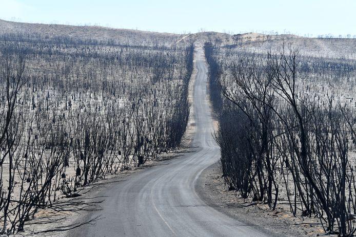 Zo ziet Kangaroo Island er nu uit, na de doortocht van de vlammenzee.