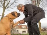 Kamerdebat over hondenbelasting uitgesteld tot na de verkiezingen