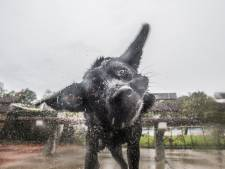 Groot onderzoek naar hondenbeleid in Lingewaard: hondenbelasting afschaffen of niet?