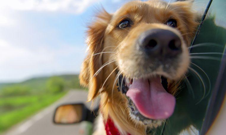6 tips voor een mooie foto van je hond - Mooie huis foto ...