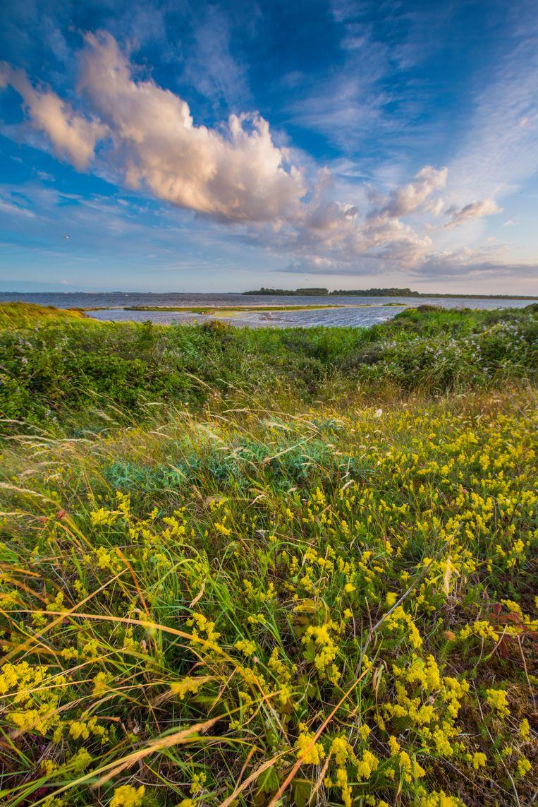 Dijk langs het Grevelingenmeer. Beeld Buiten-beeld