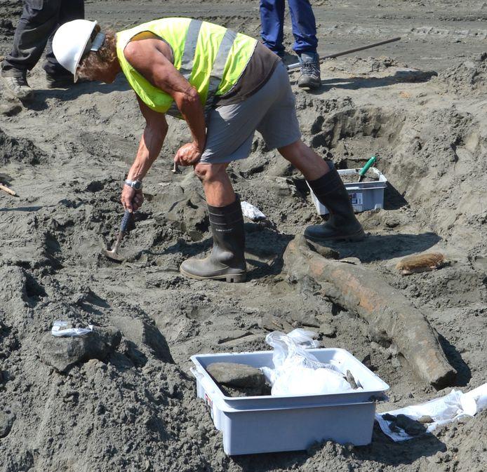 De vinvisresten worden heel voorzichtig opgegraven.
