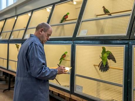 Vogelshow telt weer veel potentiële kampioenen