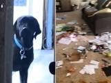 Puppy heeft verrassing voor baasje die thuiskomt na lange nachtshift