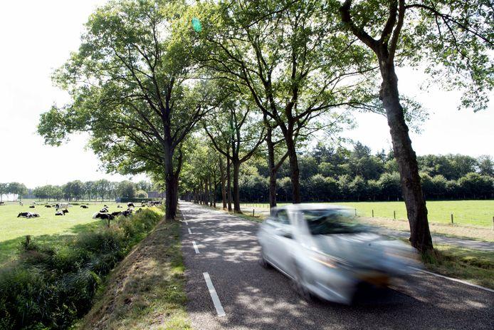 Dit jaar werden al meerdere rijbewijzen ingenomen na een snelheidsovertreding op de Tolhuisweg.