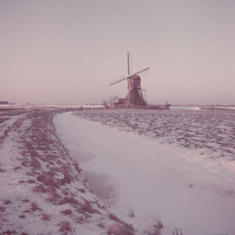 Windmolen bij Amsterdam, winter 1950. Beeld Getty Images