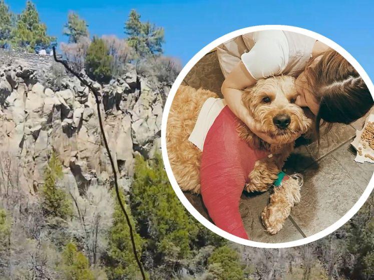 Un chien tombe d'une falaise et survit à une chute de 60 mètres