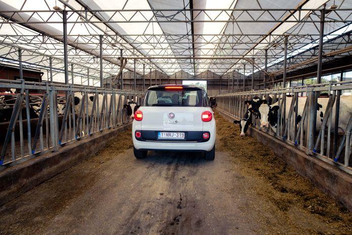Drive-in bij koeienboerderij in Zoersel.