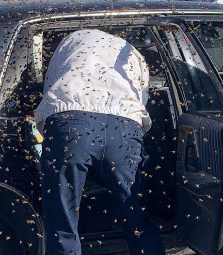 Beangstigend: man vindt 15.000 bijen in zijn auto wanneer hij terugkomt van de supermarkt