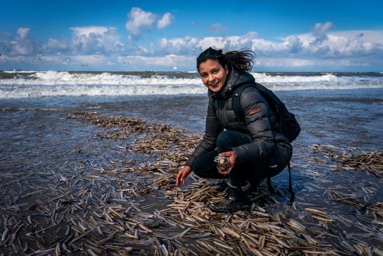 Serena Rivero onderzoekt  aangespoelde schelpen, zeesterren en zeepaardjes op het strand van Scheveningen.  Beeld Jerry Lampen