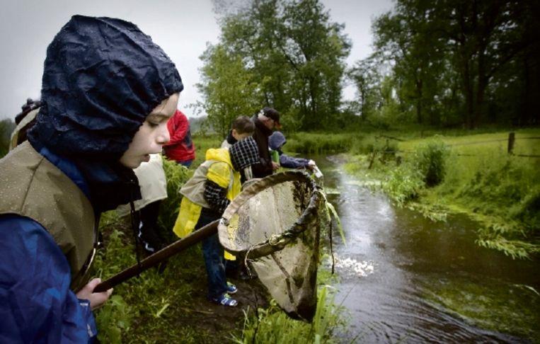 De 'hulpboswachters' aan het werk. Met een netje scheppen ze insecten uit een beek. (FOTO KOEN VERHEIJDEN) Beeld