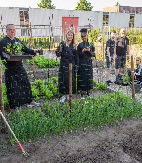 Bij MaxX in Neede koken ze met zelfgekweekte groenten en kruiden: 'Zijn de meloenen al klaar?'
