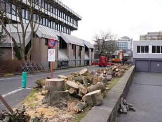 16 bomen aan Henleykaai gekapt omdat ze  parkeergarage van de buren bedreigden