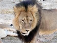Les charges contre l'organisateur de la chasse du lion Cecil abandonnées