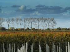 Zeeland heeft een prachtige bosvisie maar er is nul euro meegekomen uit Den Haag: 'Er moet wel boter bij de vis'