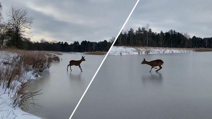 Beetje Bambi in Nederland.