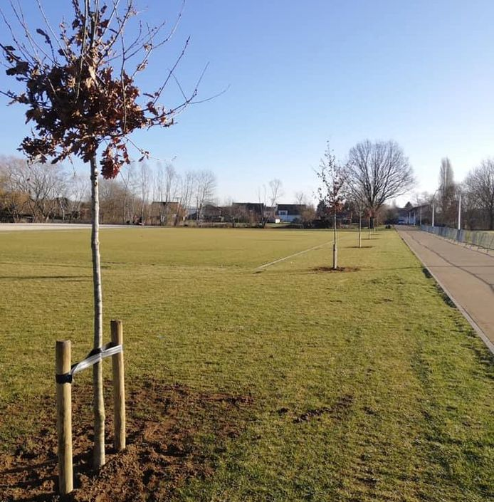 Diest plant 36 nieuwe bomen op Oosterlindevel.