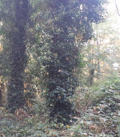 Ja, er verdwijnt groen op Steenenburg; maar er komt méér terug
