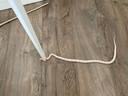 De slang in het Amsterdamse bed is gedood nadat de bewoner hem ontdekte.