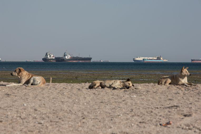 Schepen wachten bij de ingang van het Suezkanaal op het vlot trekken van het gestrande containerschip Ever Given. Een deel van die wachtende schepen zet inmiddels koers naar de haven van Rotterdam.  Beeld Getty Images