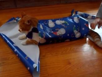 Zo pak je een kat in als kerstcadeau