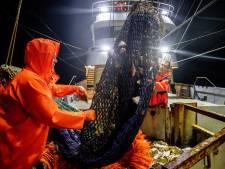 Verslagenheid na uitspraak pulsvisserij: 'Dit gaat familiebedrijven de kop kosten'