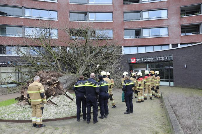 Op de Ridderhof in Oss is een grote boom omgevallen tegen een gebouw.