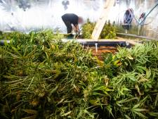Wietplantage met honderden planten ontdekt in Hattem: twee aanhoudingen