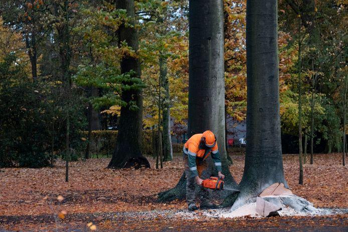 In 2017-2018 werden er heel wat bomen gekapt in het Gemeentepark, maar er werden er ook 436 nieuwe aangeplant. Een deel daarvan heeft het echter niet overleefd.