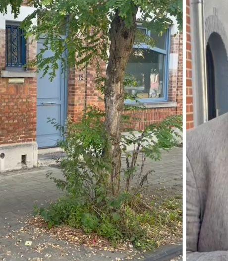 Oude dame plant per ongeluk twee meter hoge cannabisplant op voetpad