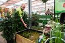 Regenwater opvangen in een vijver zorgt voor verkoeling, in een regenton voor besparing op kraanwater bij het besproeien van de tuin.