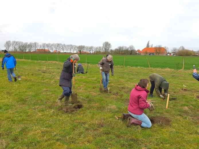Vrijwilligers voor NL Doet poten nieuwe fruitstruiken en bomen in de vette klei van de schapenwei die transformeert in voedselbos de Langhe Laere bij Nieuw- en Sint-Joosland.