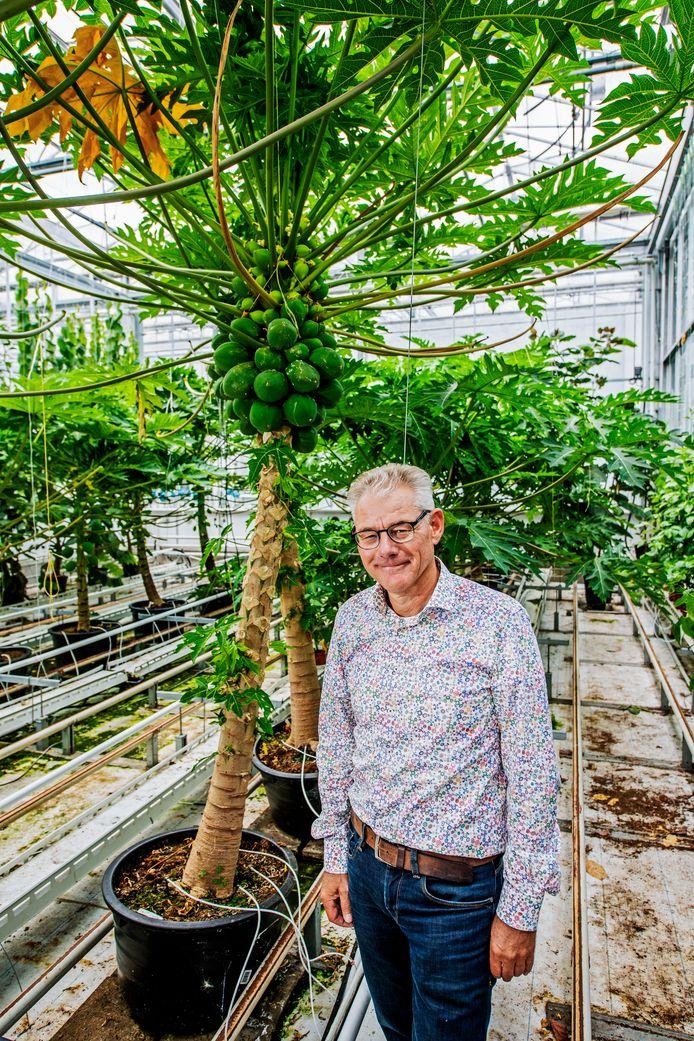 Sjaak Bakker, manager glastuinbouw bij de Wageningen Universiteit, in de kas met papaja's en avocado's.