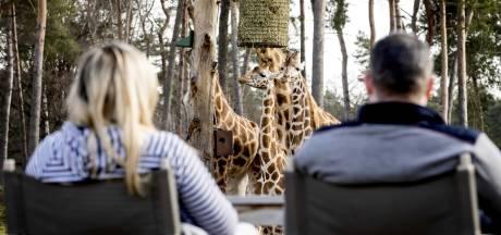 Safari Resort op Beekse Bergen gaat fors uitbreiden met 120 familiekamers en een nieuwe savanne