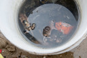 De dode ratten liggen sinds oktober in een emmer te rotten.