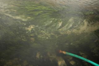 fotoreeks over Kurkdroog Kaapstad snakt naar water
