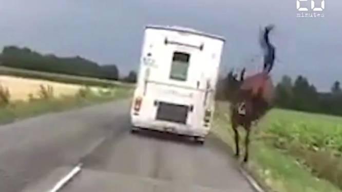 """""""Dierenmishandeling"""": video van paard dat achter wagen loopt veroorzaakt ophef"""