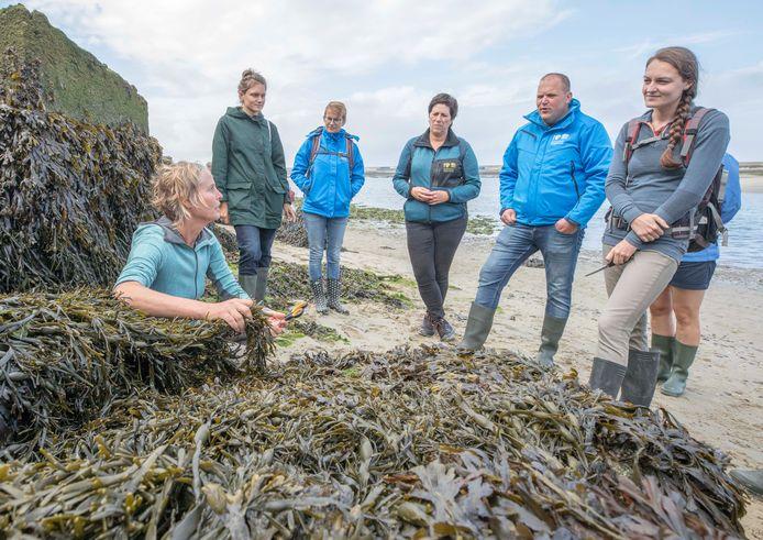 Wierenwandeling: Ellen Schoenmakers (links) vertelt over de wieren. Rechts Luna van der Loos, auteur van de Veldgids Zeewieren.