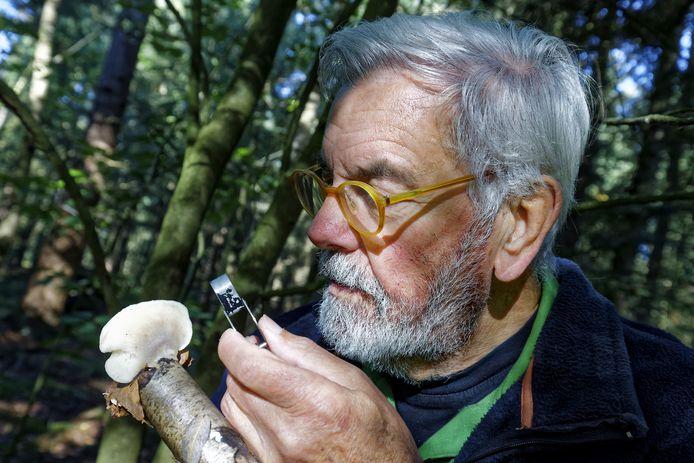 Cor Kievit kijkt met een loep welke soort paddensteol of zwam hij heeft gevonden.