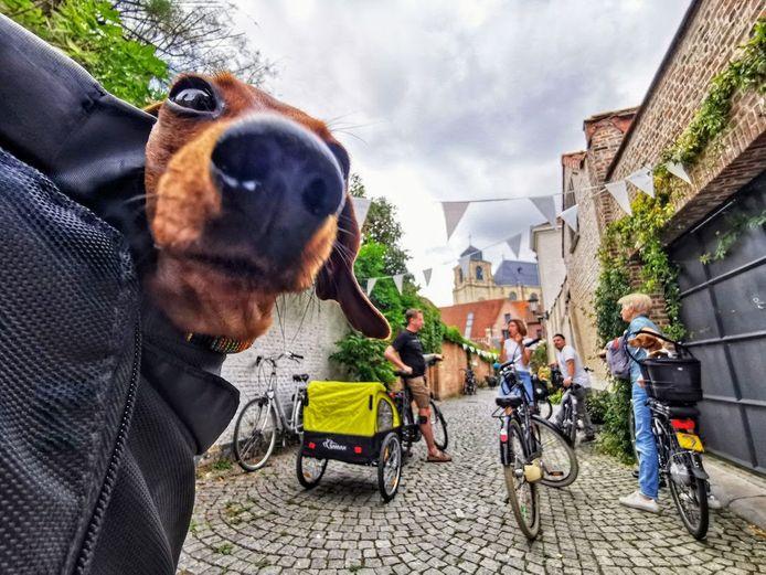 De Fietsgids en Mill-Agency organiseerden zondag een eerste Dogs on Wheels voor baasjes en hun honden.